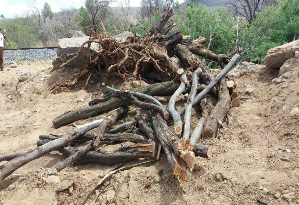 Brumado: moradores da Vila Presidente Vargas denunciam desmatamento na localidade