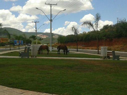 Brumado: Animais estão destruindo a grama da Praça Lindolfo Azevedo Brito