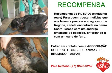 ASPAB: ANIMAL É ENCONTRADO FERIDO