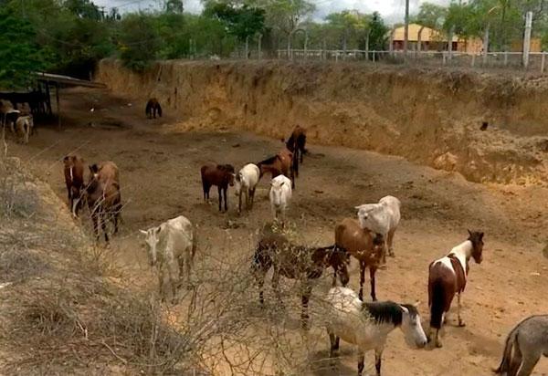 Vitória da Conquista: Populares  denunciam que animais resgatados por prefeitura adoecem e morrem em abrigo