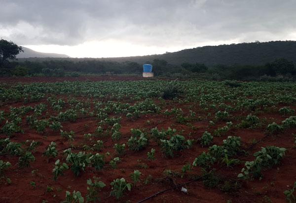 Governo do Estado lança edital emergencial para apoiar produção de alimentos por agricultores familiares da Bahia