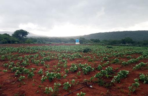 Dados do IBGE indicam que a Bahia é o único estado do nordeste a sofrer queda no valor da agricultura brasileira