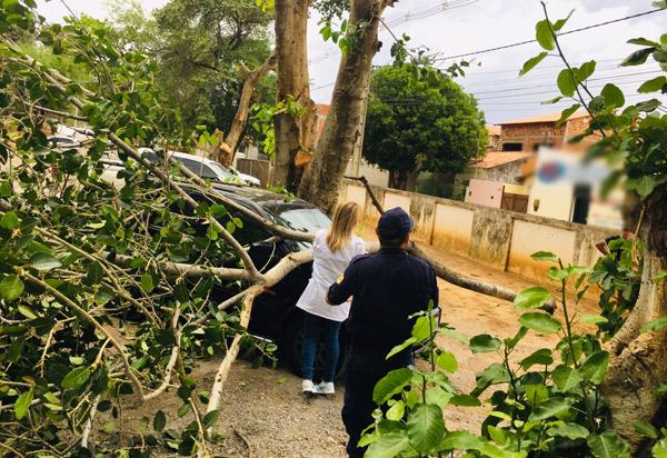Brumado: Carro que estava estacionado no Hospital Professor Magalhães Neto é atingido por galho de árvore após forte vento