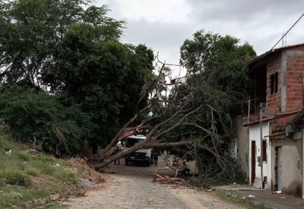 Brumado: durante temporal, árvore cai em cima de casas no bairro Dr. Juracy