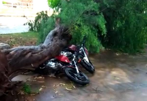 Forte chuva causa queda de árvores e danifica motocicletas em Brumado