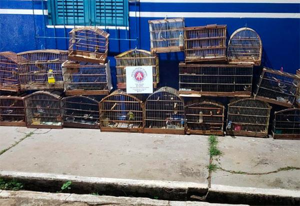 Livramento: Polícia Militar apreende animais silvestres em uma residência no Bairro Estocada