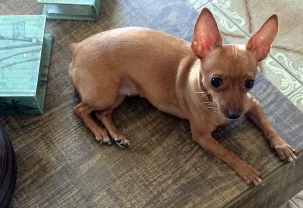 Brumado: Cadela está desaparecida