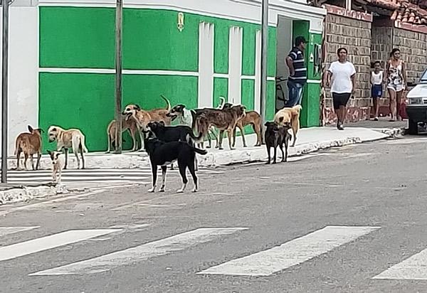 Brumado: Animais soltos na Avenida Otávio Mangabeira preocupa populares