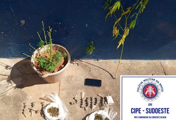 Caesg desarticula cultivo ilegal de maconha em Barra da Estiva