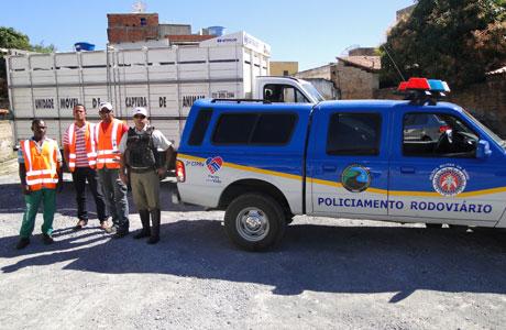 POLÍCIA RODOVIÁRIA RETIRA ANIMAIS DAS PISTAS