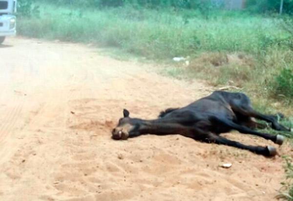 Brumado: moradores do Bairro Feliciano Pereira Santos solicitam que poder público recolha cavalo morto do local
