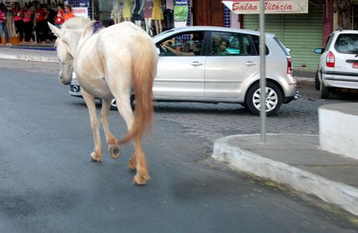 Brumado: Cavalos 'passeiam' pelo centro; podendo causar acidentes