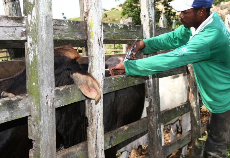 Aracatu: campanha de vacinação contra a febre aftosa ocorre entre 1° a 30 de novembro