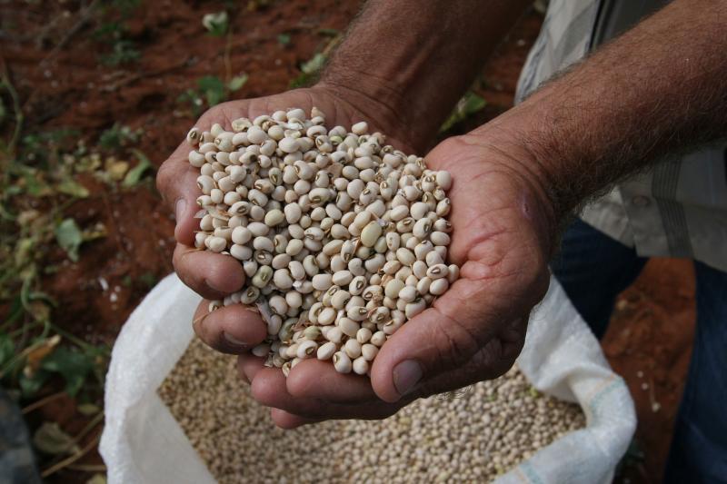 IBGE estima safra de 8,6 milhões de toneladas de grãos em 2020 na Bahia