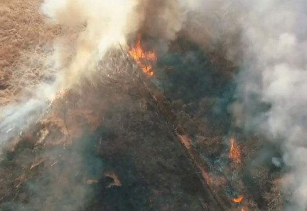 Guanambi: Incêndio destrói 90 hectares de vegetação