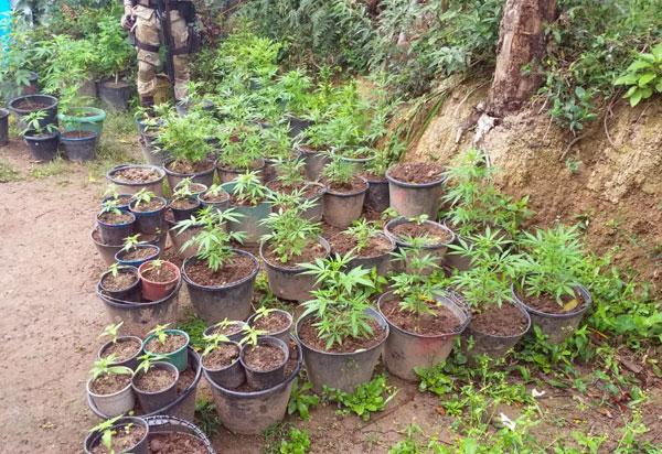 Chapada Diamantina: Plantações de maconha descobertas no Vale do Capão
