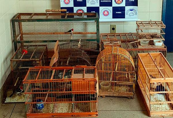 Polícia Militar apreendeu 27 animais silvestres na feira livre de Brumado