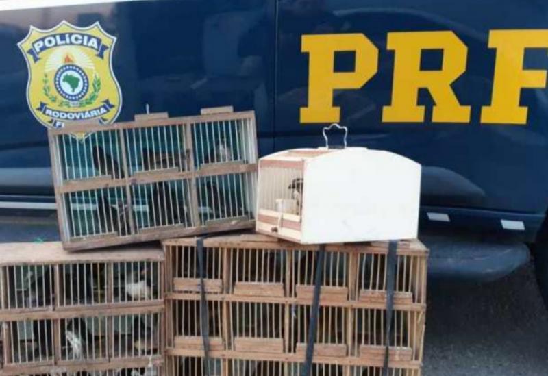 Conquista: PRF resgata pássaros sendo transportados irregularmente dentro de compartimento de bagagens