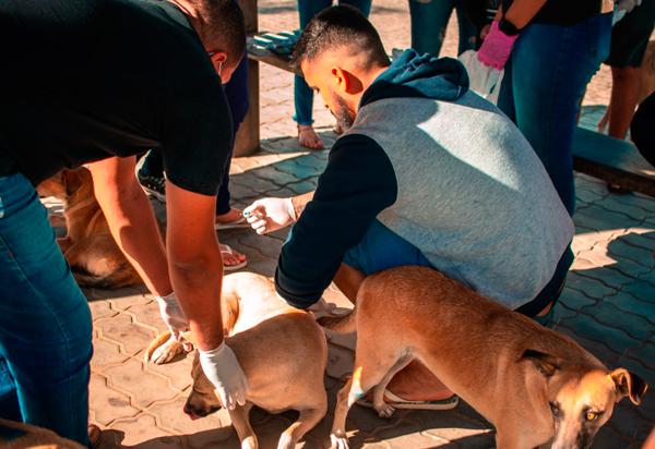 ONG PROAATU vacinou mais de 60 cachorros de rua