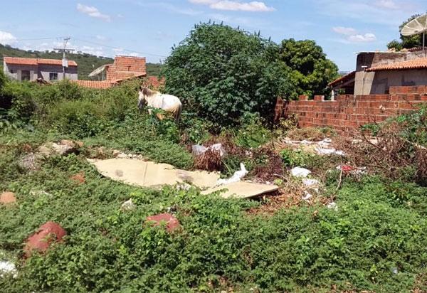 Brumado: Mato, lixo e entulho em terreno baldio causa transtornos a moradores do bairro Malhada Branca