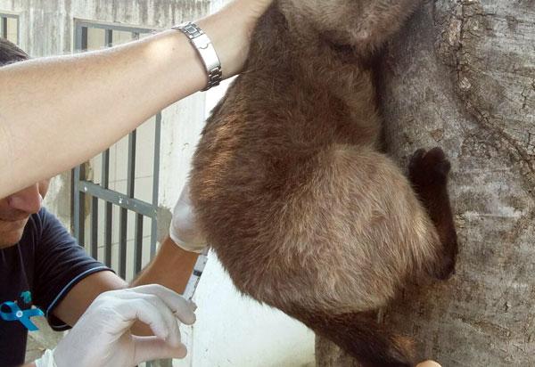Aracatu: Dia 26 de setembro será realizada vacinação de raiva animal